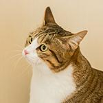 管理猫のチャッピー